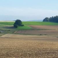 Landschaftspflegerische Ausführungsplanung zum 6-streifigen Ausbau der A 7 am Autobahnkreuz Salzgitter
