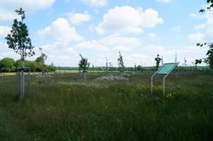 Renaturierung einer Sportplatzfläche