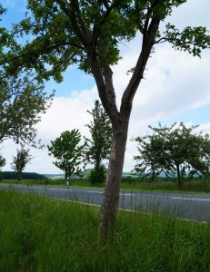 Baumgutachten Wulkow-Herzberg