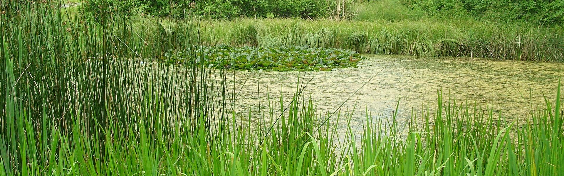 Pflege- und Entwicklungskonzept- Teich im Wurzelbruchpark, Gemeinde Bovenden